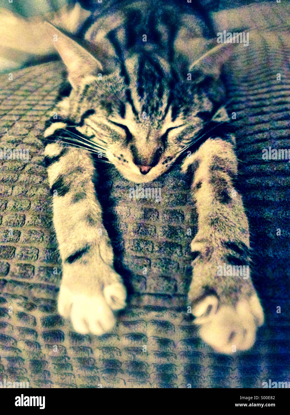 Stretched out and relaxed - Stock Image