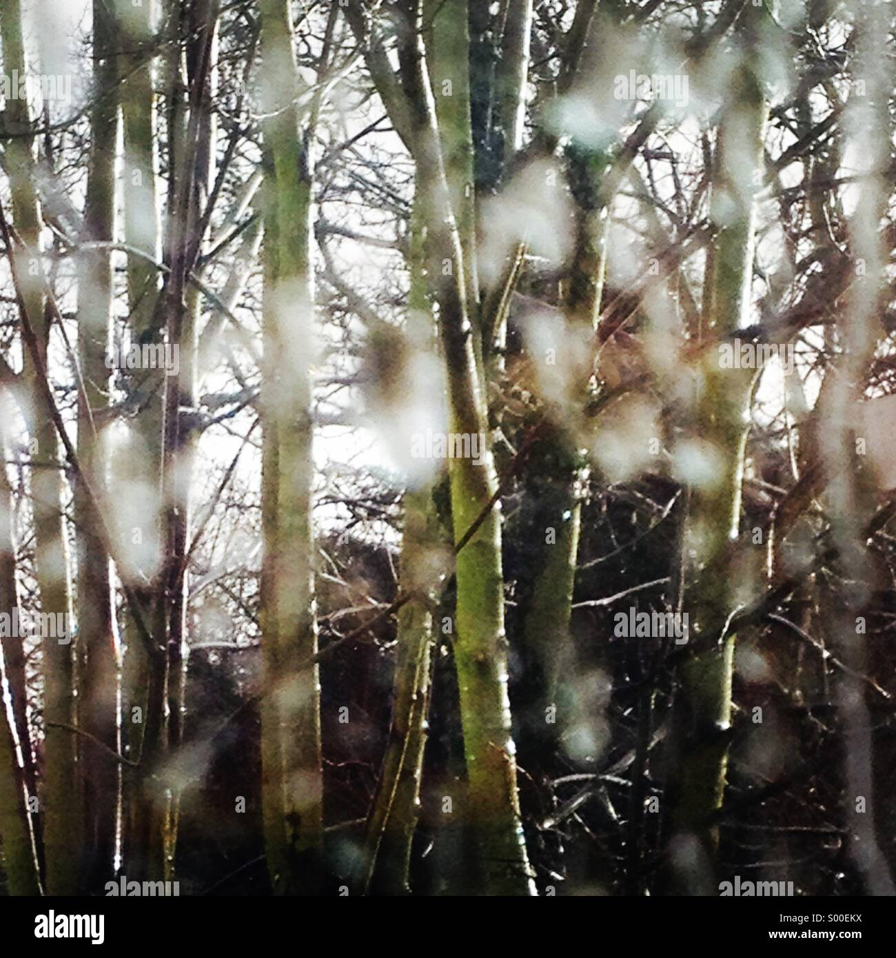 View of trees catching glimpse of sunshine through a rain covered window - Stock Image