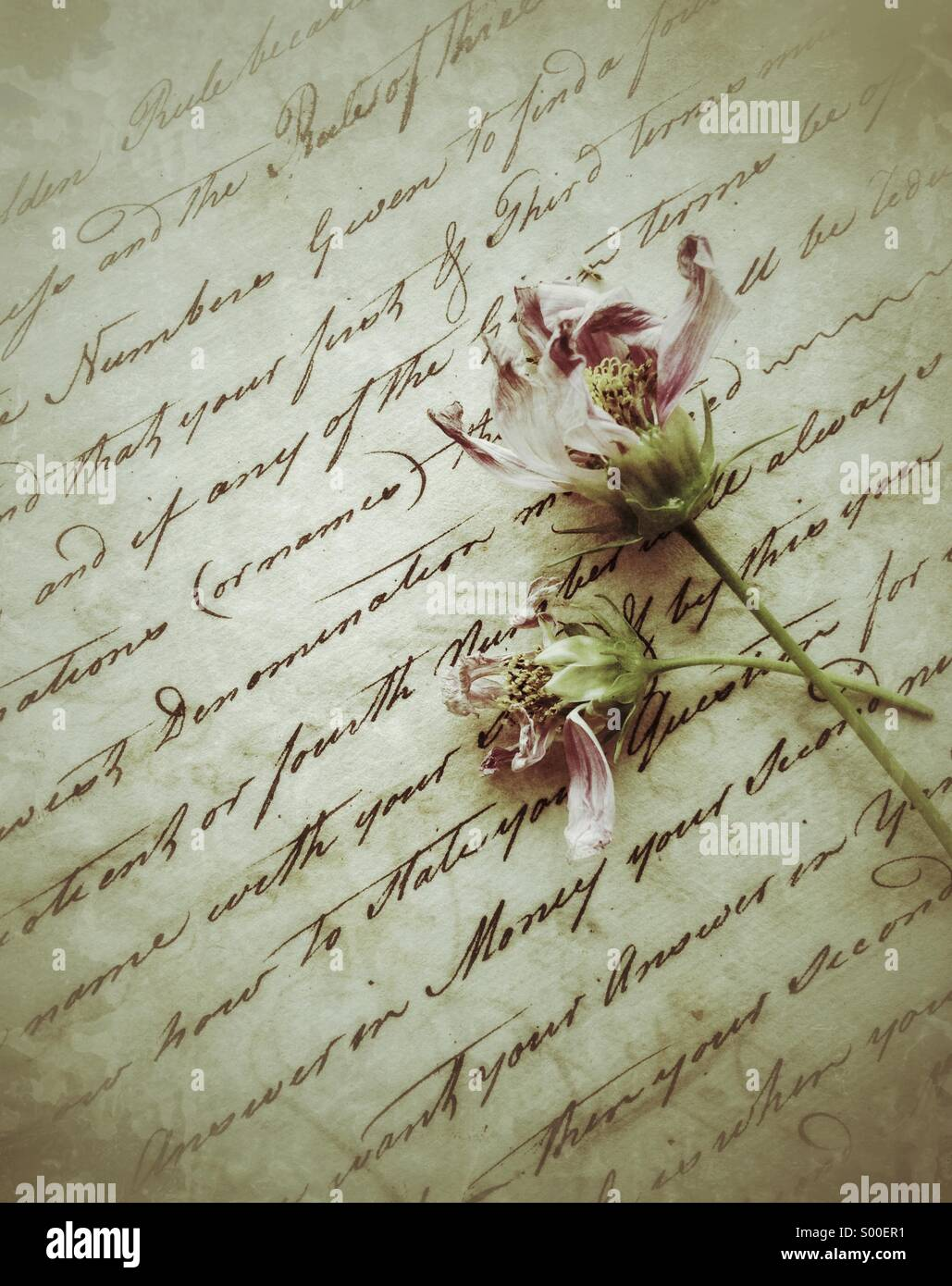 Faded cosmos flowers on old script - Stock Image