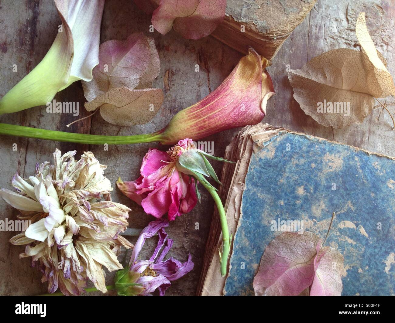 Fading flowers and old book textures - Stock Image