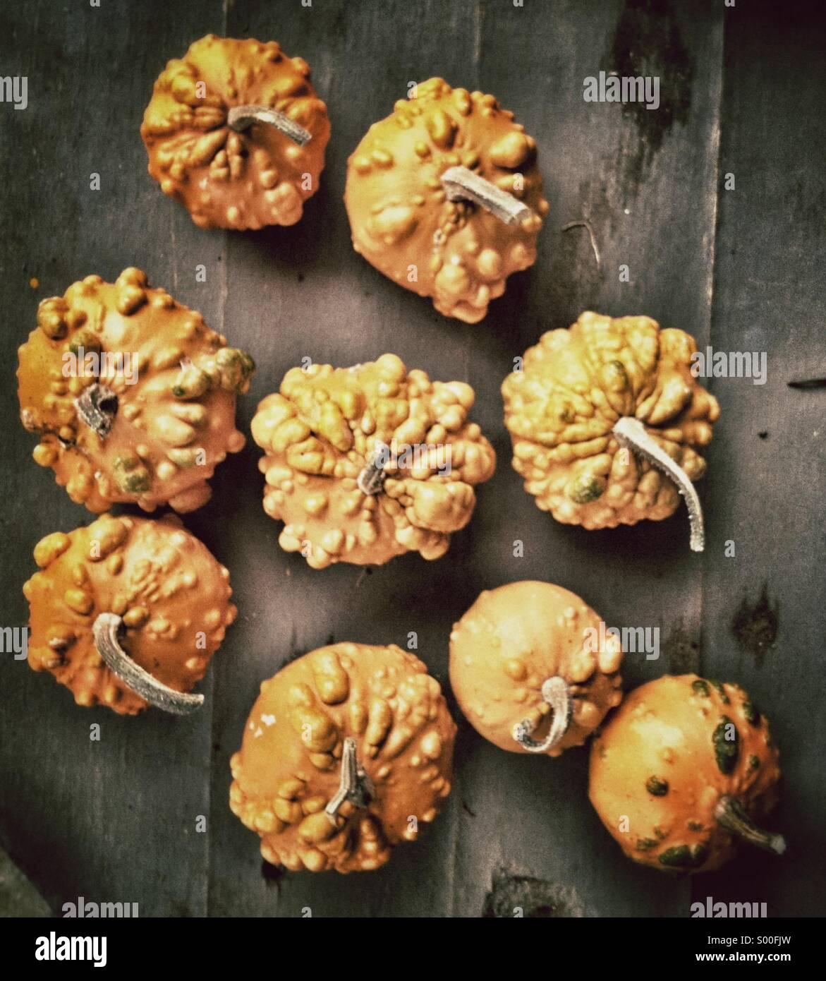 Ornamental Gourds in the market in Veliko Turnovo, Bulgaria Stock Photo