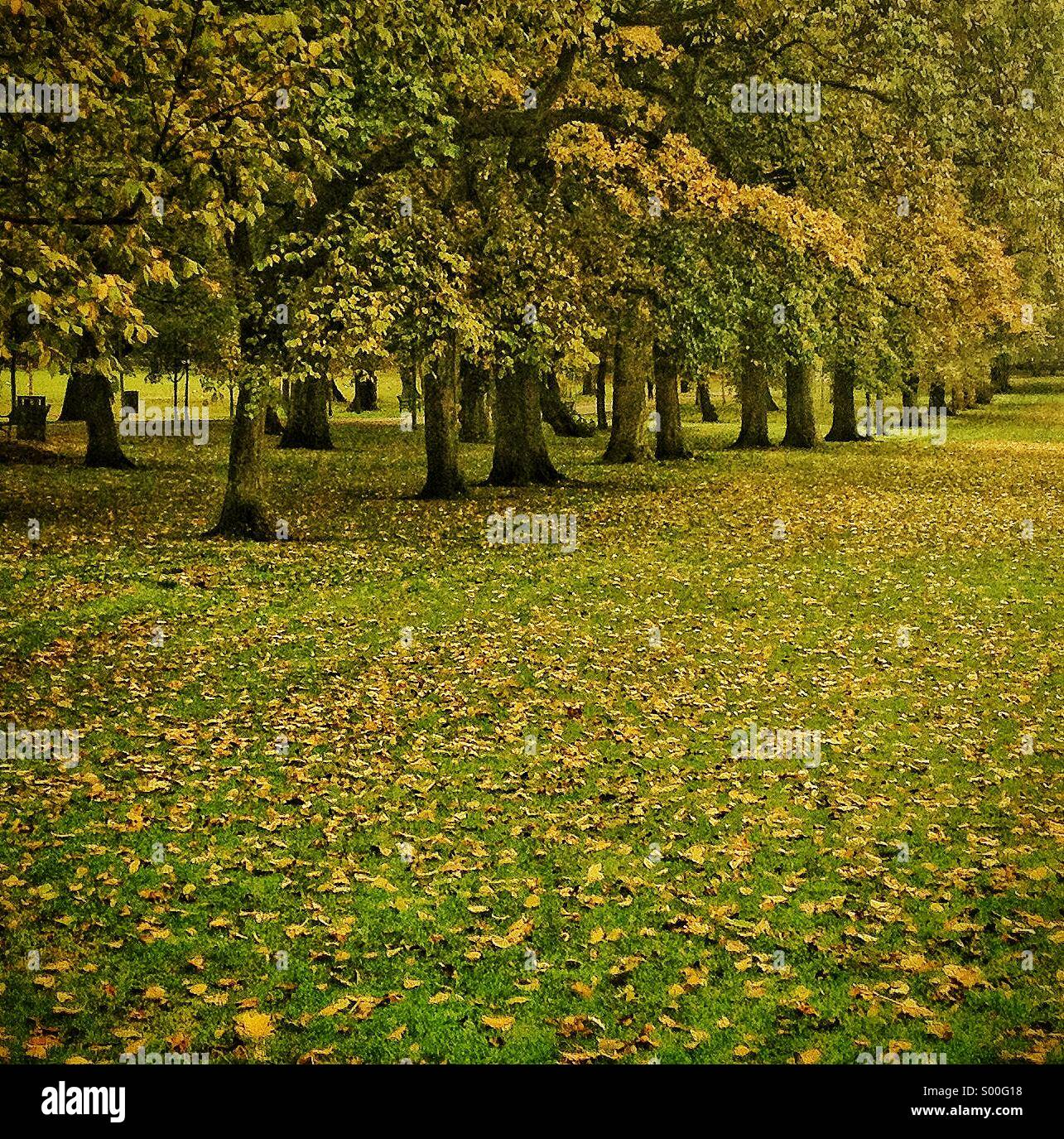 Trees lined path in autumn, Edinburgh, UK - Stock Image