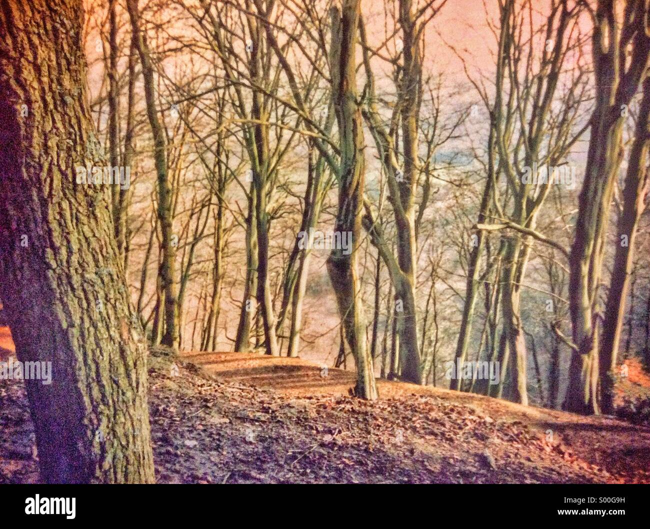 Forest in winter at dusk - Stock Image