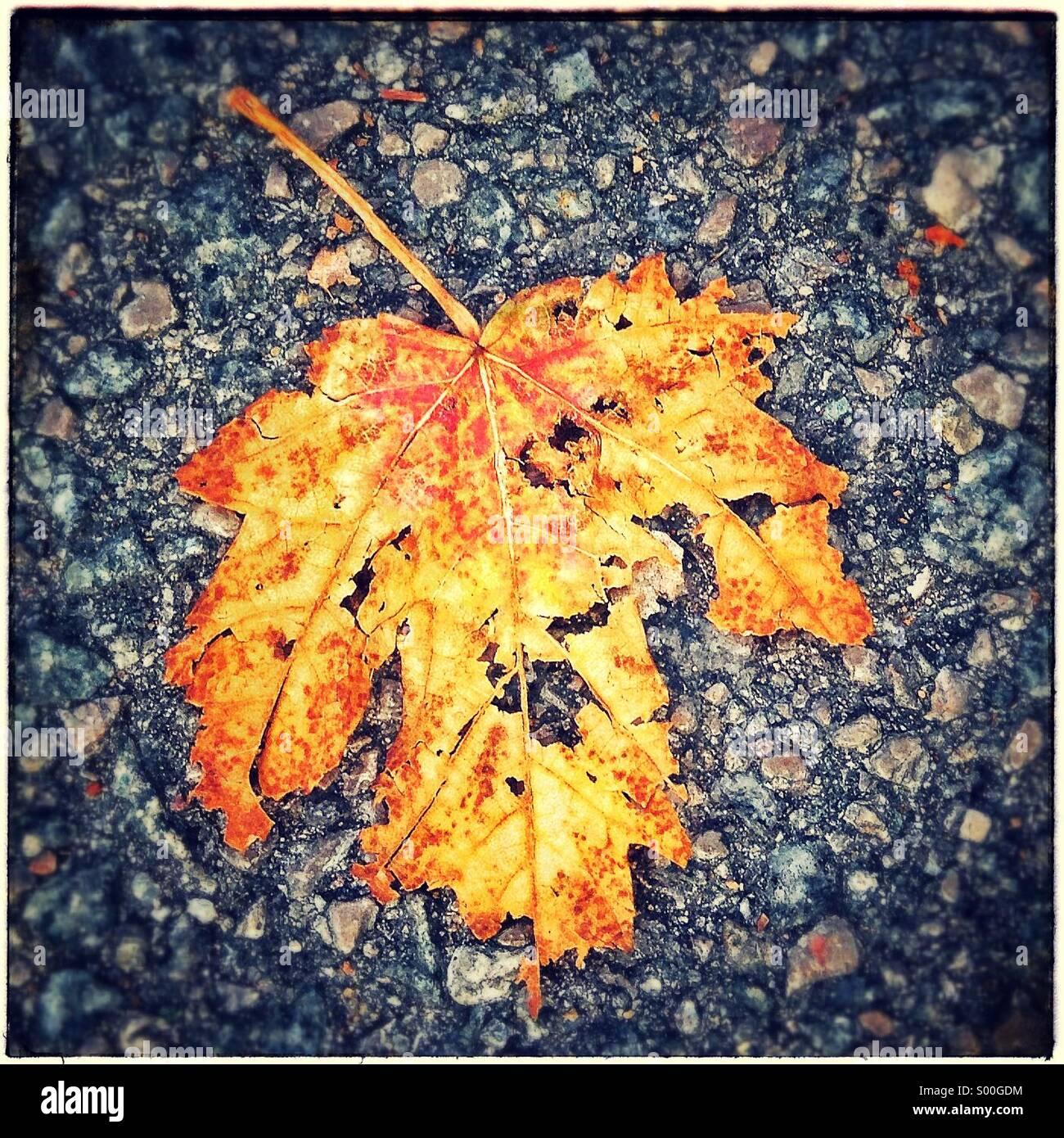 Autumn fallen leaf on floor - Stock Image