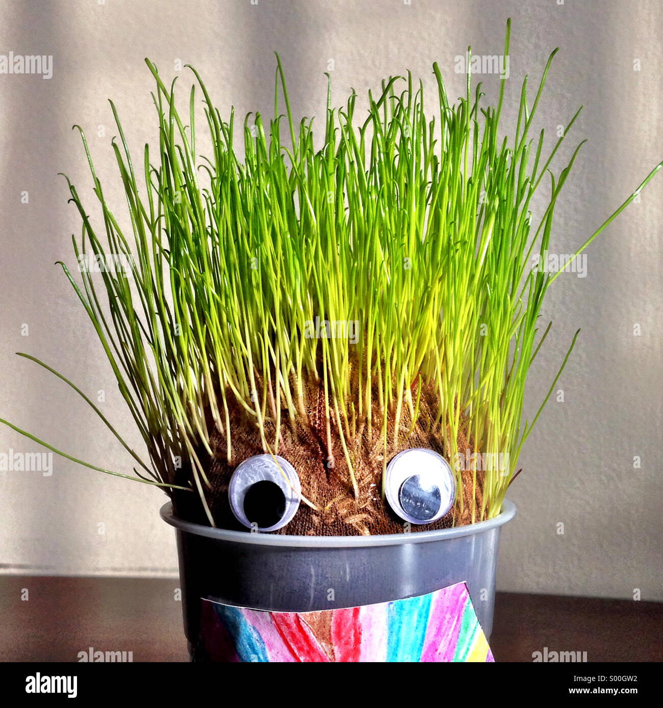 Kid's craft growing grass. - Stock Image