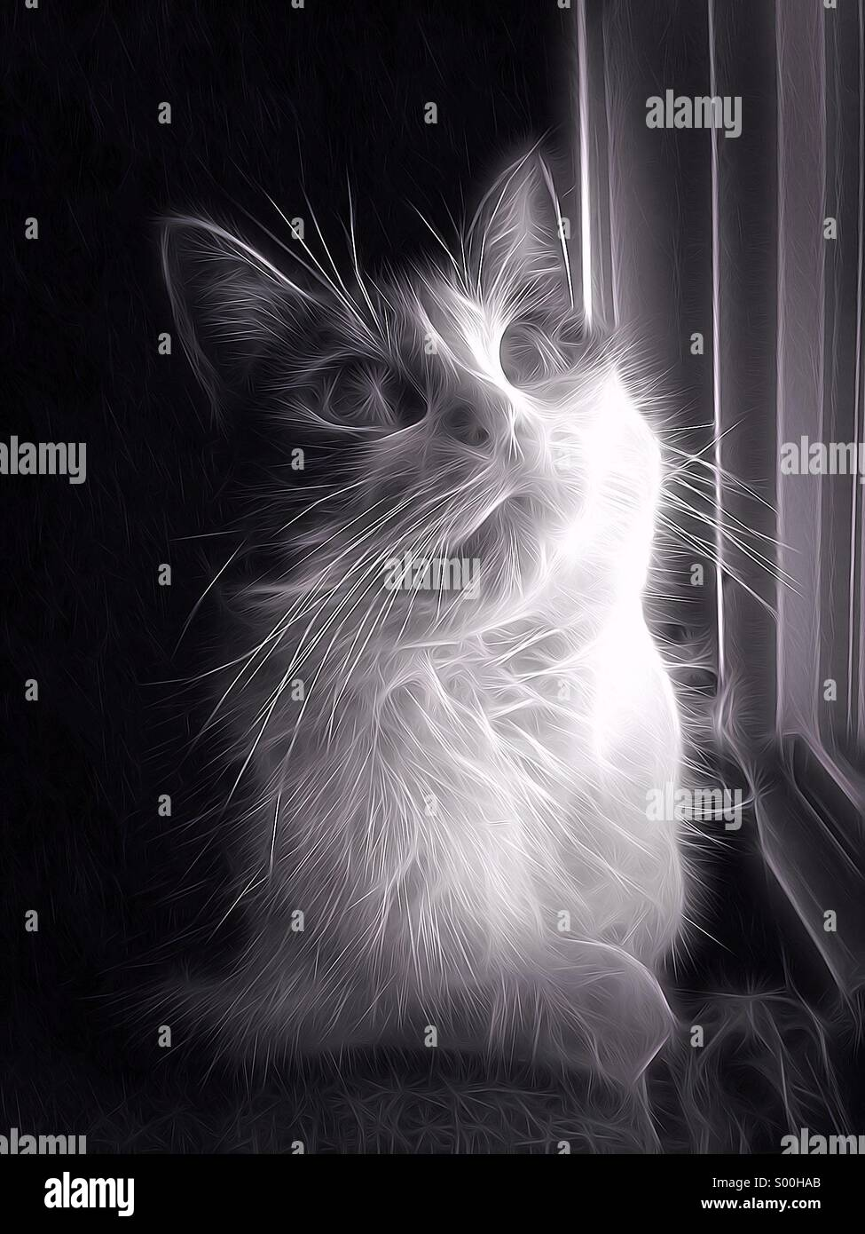 Electric kitty cat on paws - Stock Image
