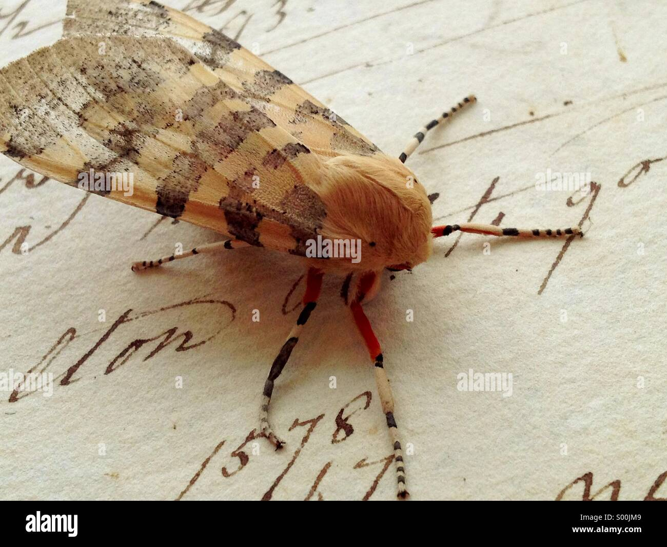 Moth on vintage script - Stock Image