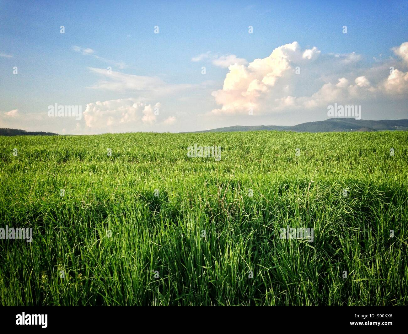 Grass field - Stock Image