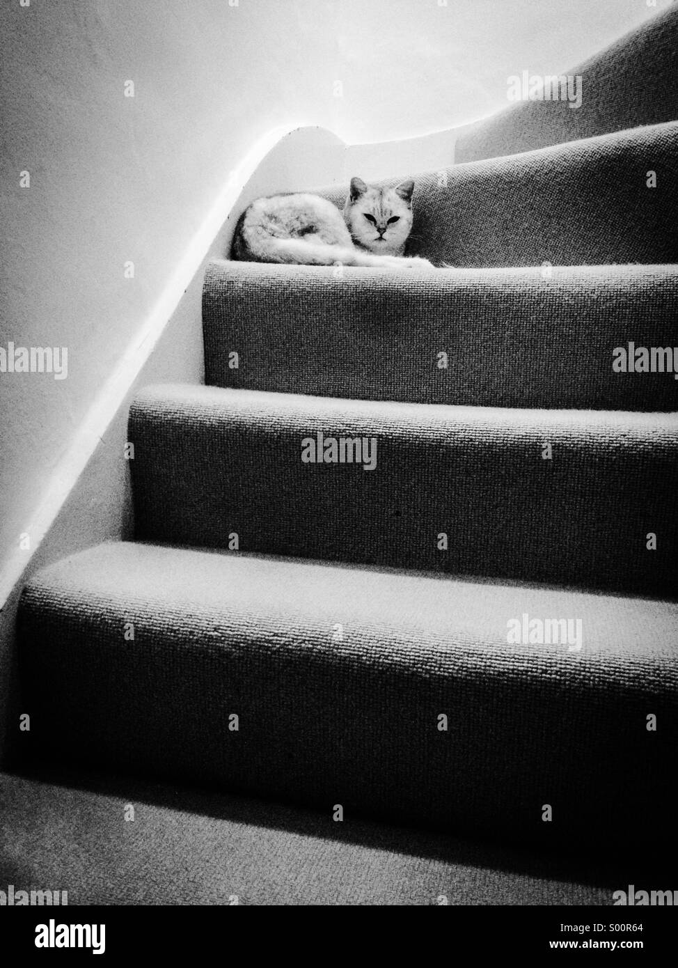 White cat resting on stairs - Stock Image