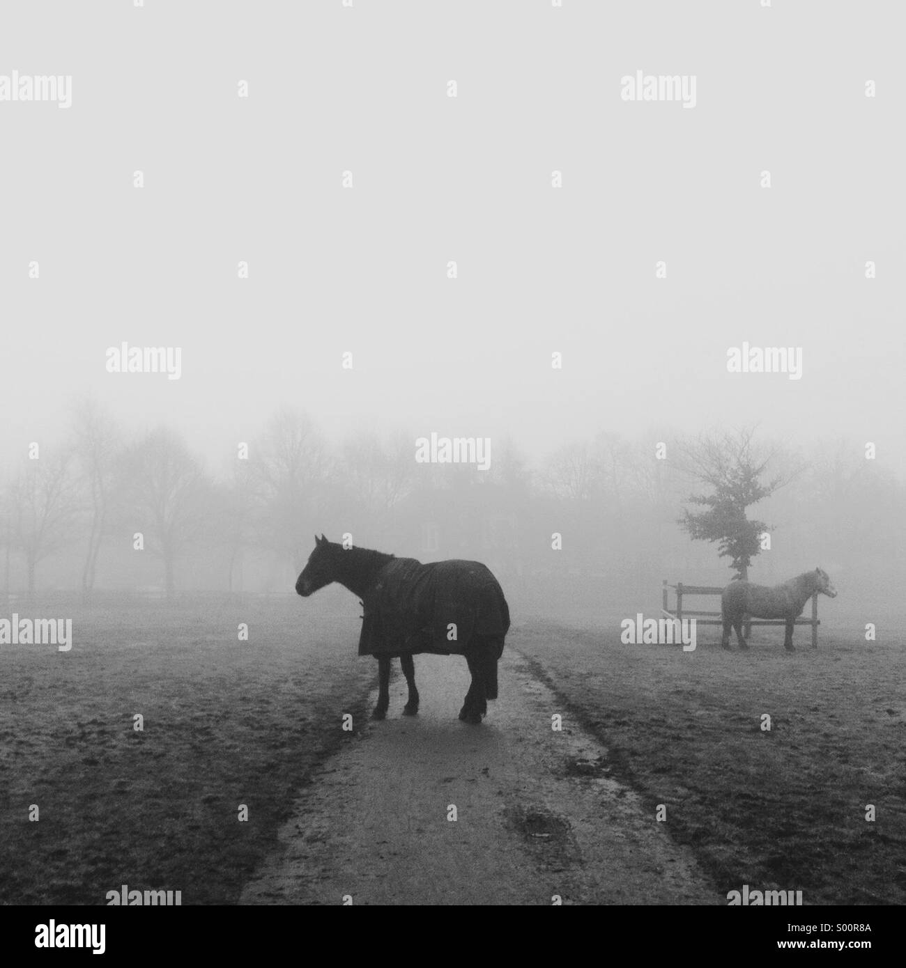 A horse wearing a coat steadfastly blocks the path in a misty scene. A second horse in the distance. - Stock Image
