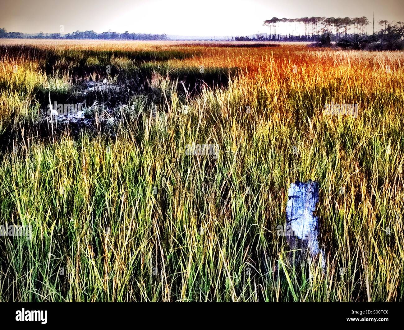 Jacksonville Beach, FL - Stock Image