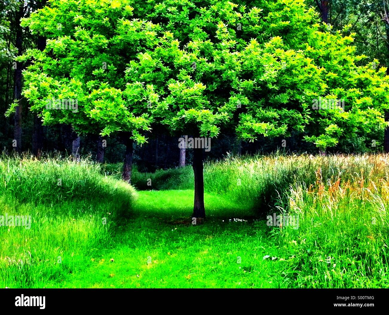 Green Tree - Stock Image