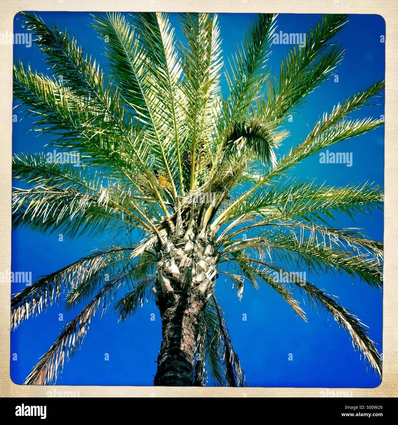 Palm tree - Stock Image