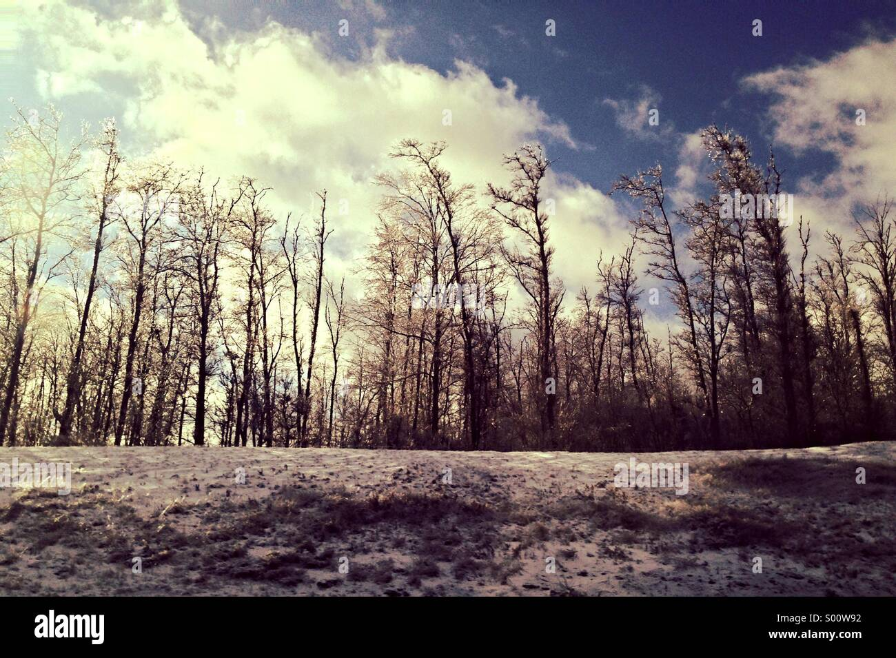 Winter trees on snowy mound - Stock Image