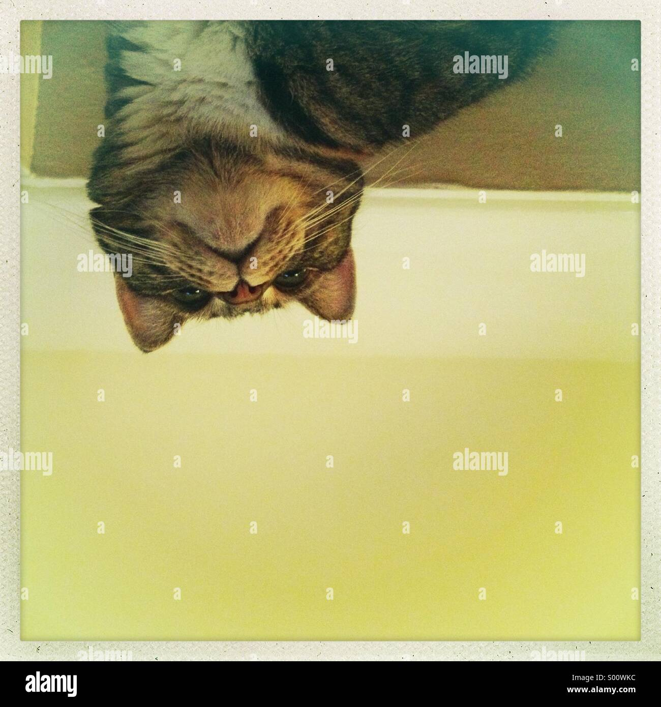 Cat from below - Stock Image