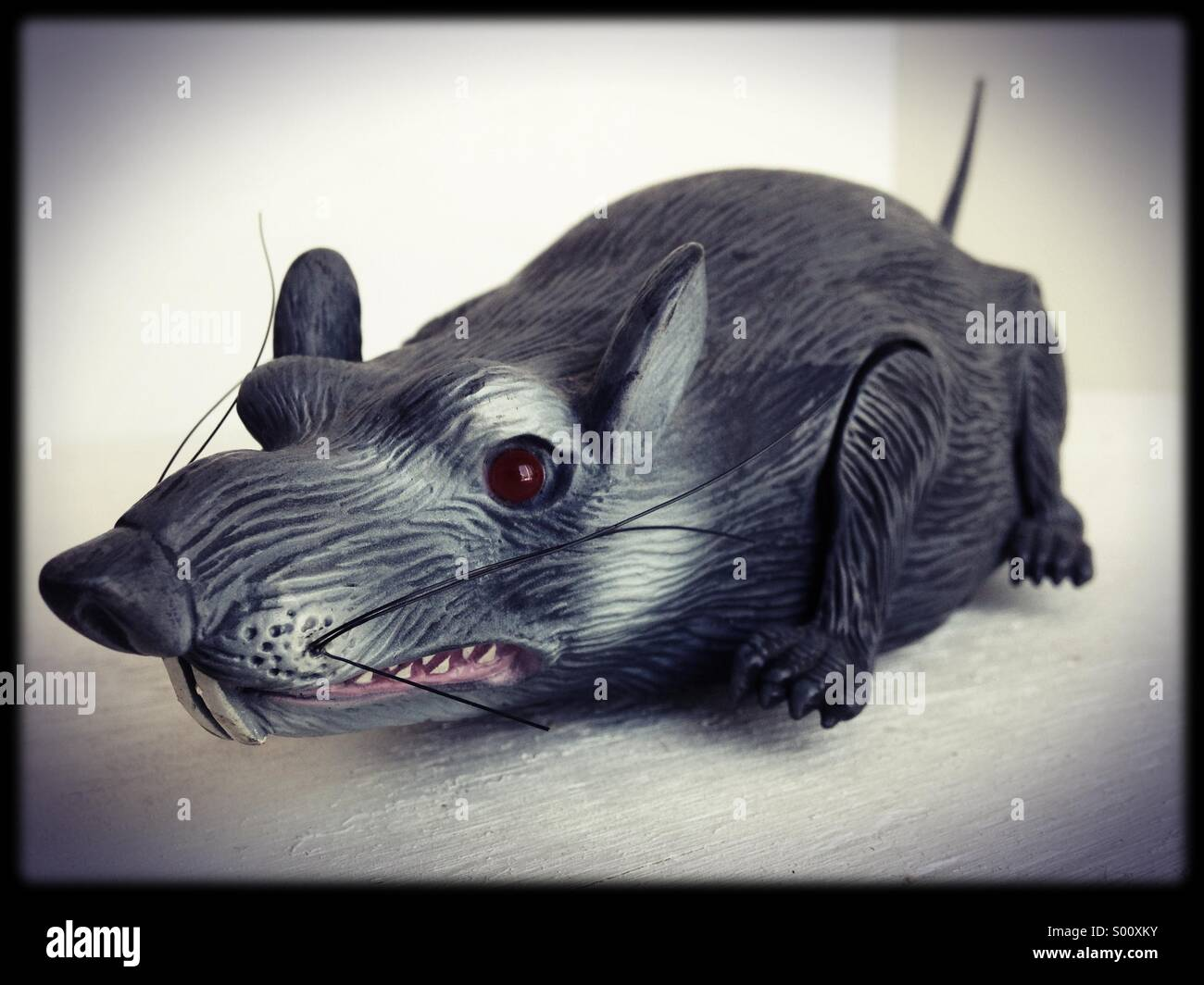 A toy rat. - Stock Image