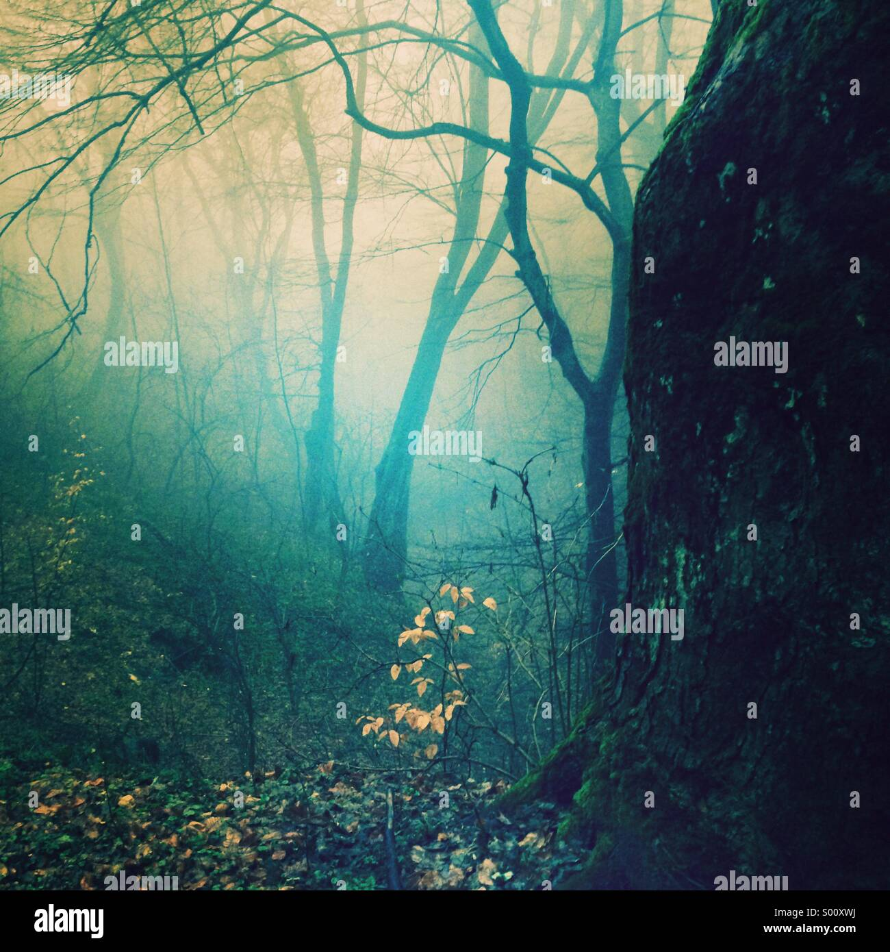 Lost in a misty fairytale - Stock Image