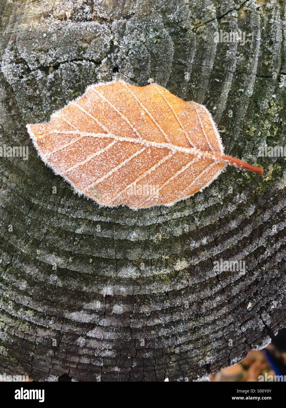 A leaf covered by frost sits on top of a tree trunk Stock Photo