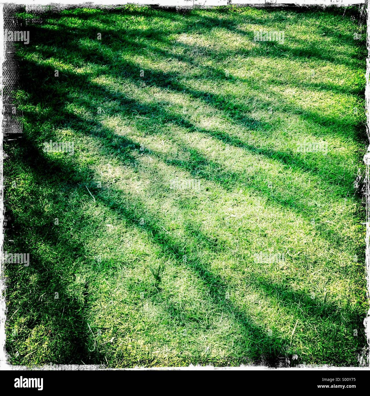 Abstract shadow of tree branches on green grass. Hipstamatic, iPhone. - Stock Image