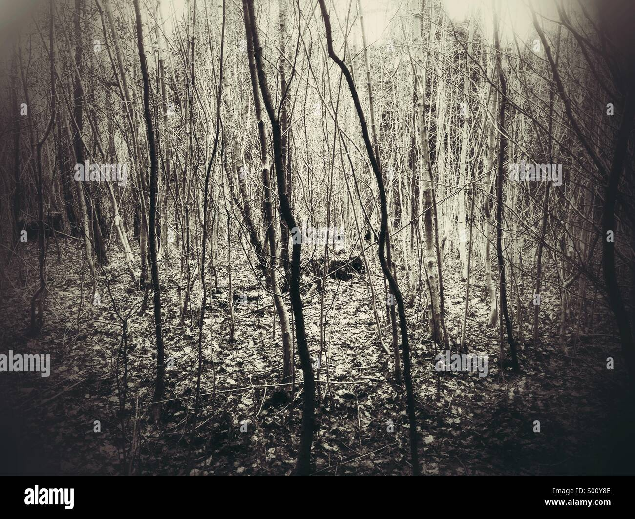 Winter woodland - Stock Image