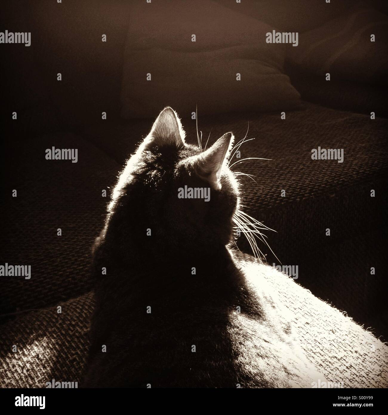 Cat in afternoon sunlight - Stock Image