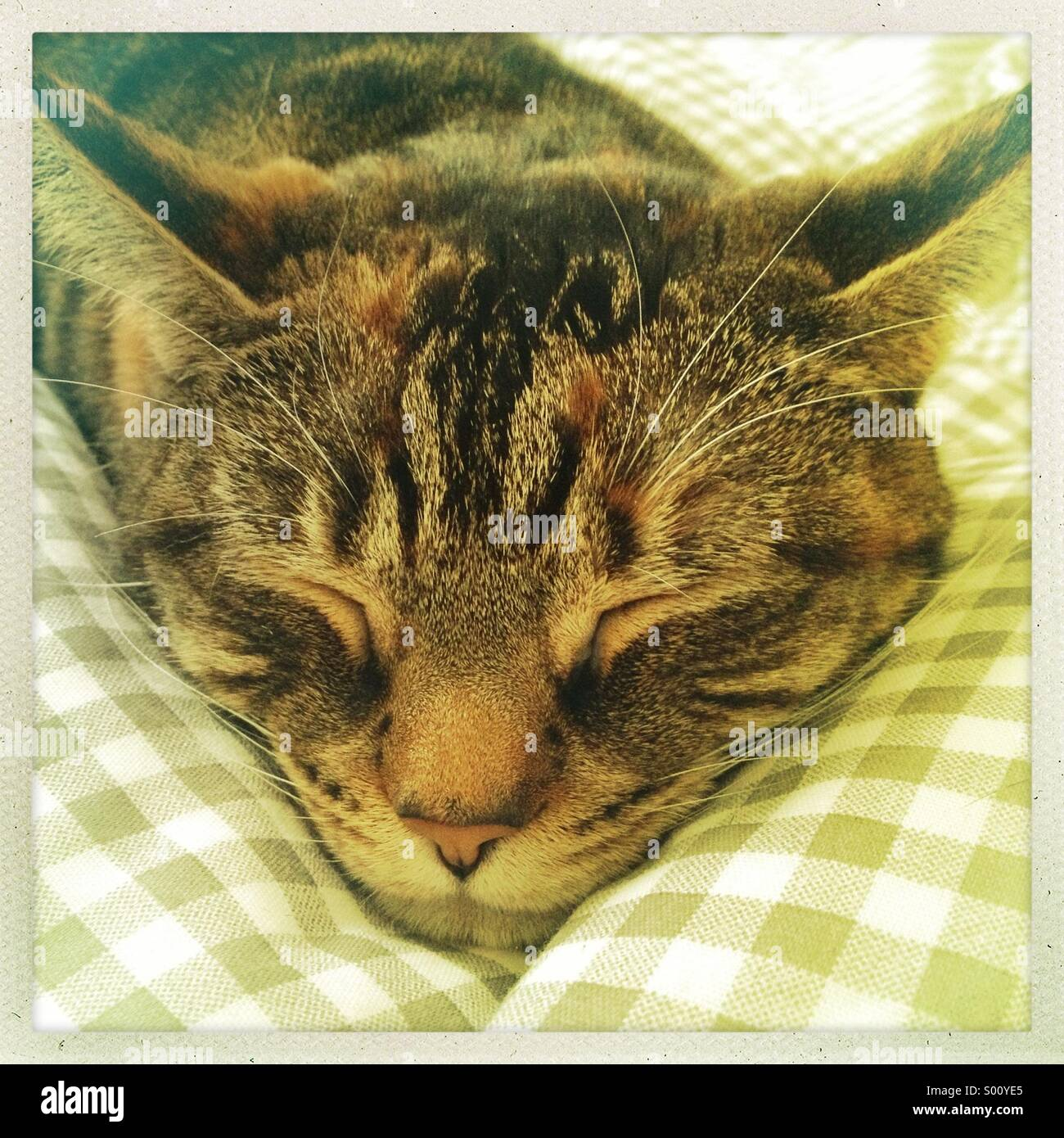Sleeping tabby cat - Stock Image