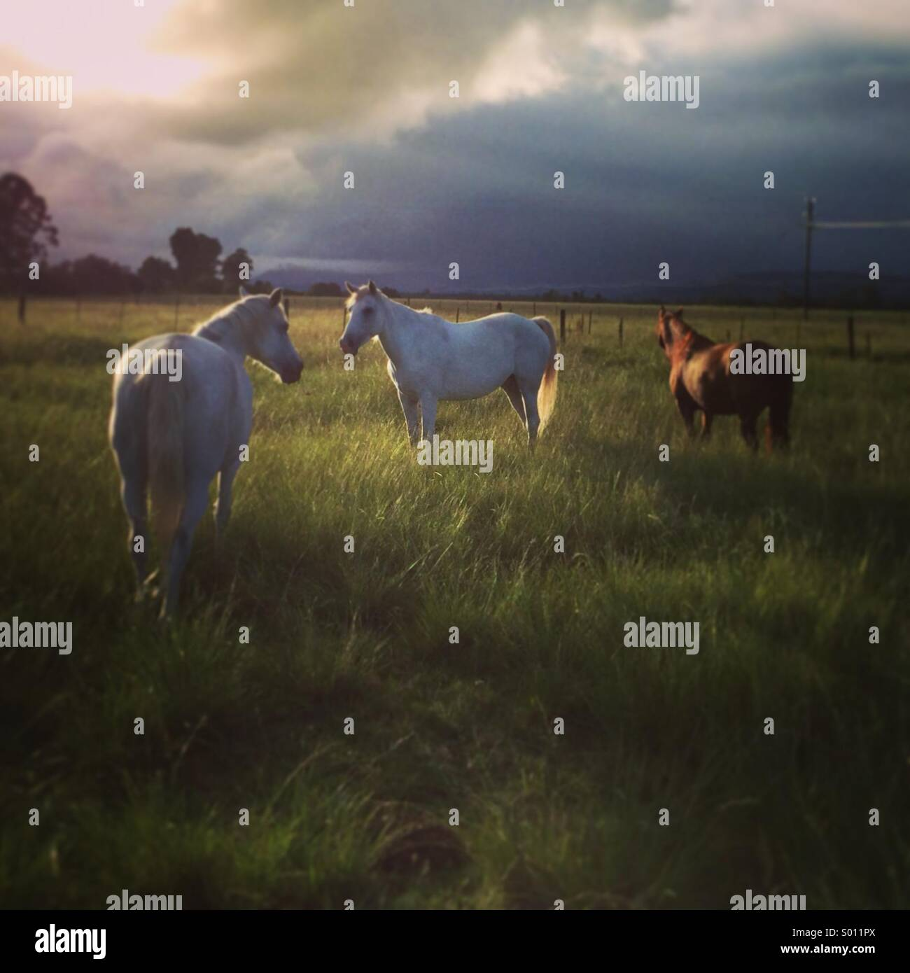 Horses in the field - Stock Image