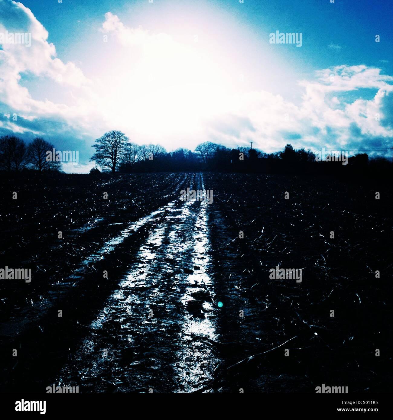 Winter light on a field - Stock Image