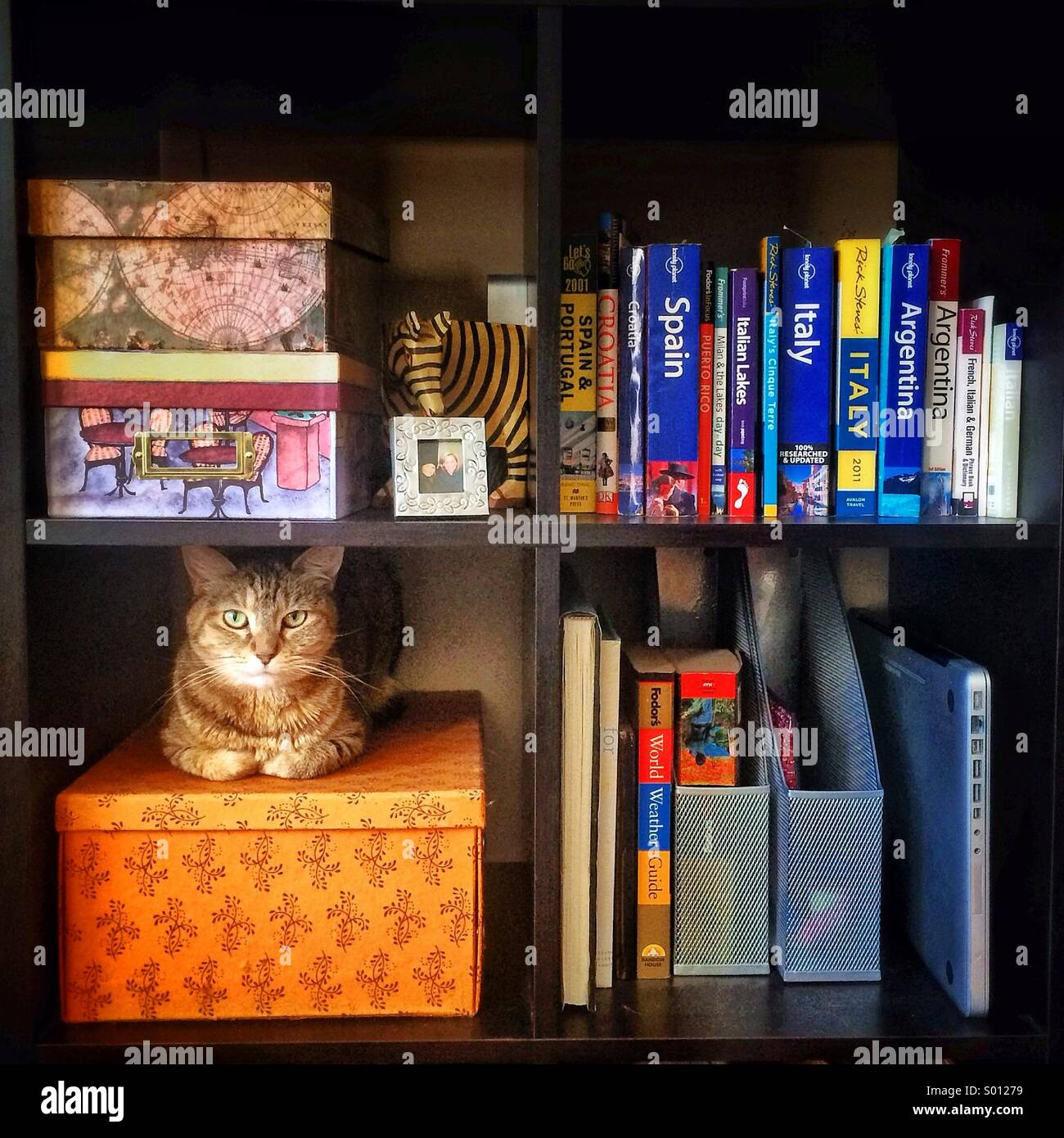 Cat In A Bookshelf