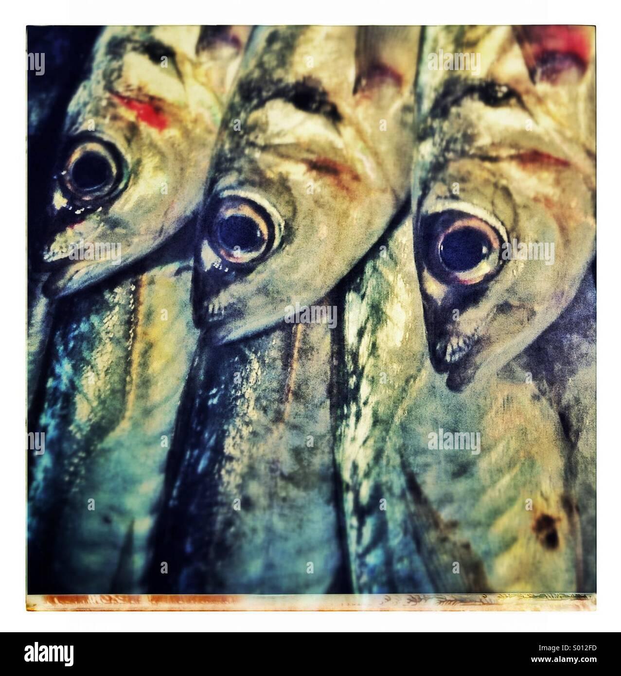 Sardines fishes close up - Stock Image