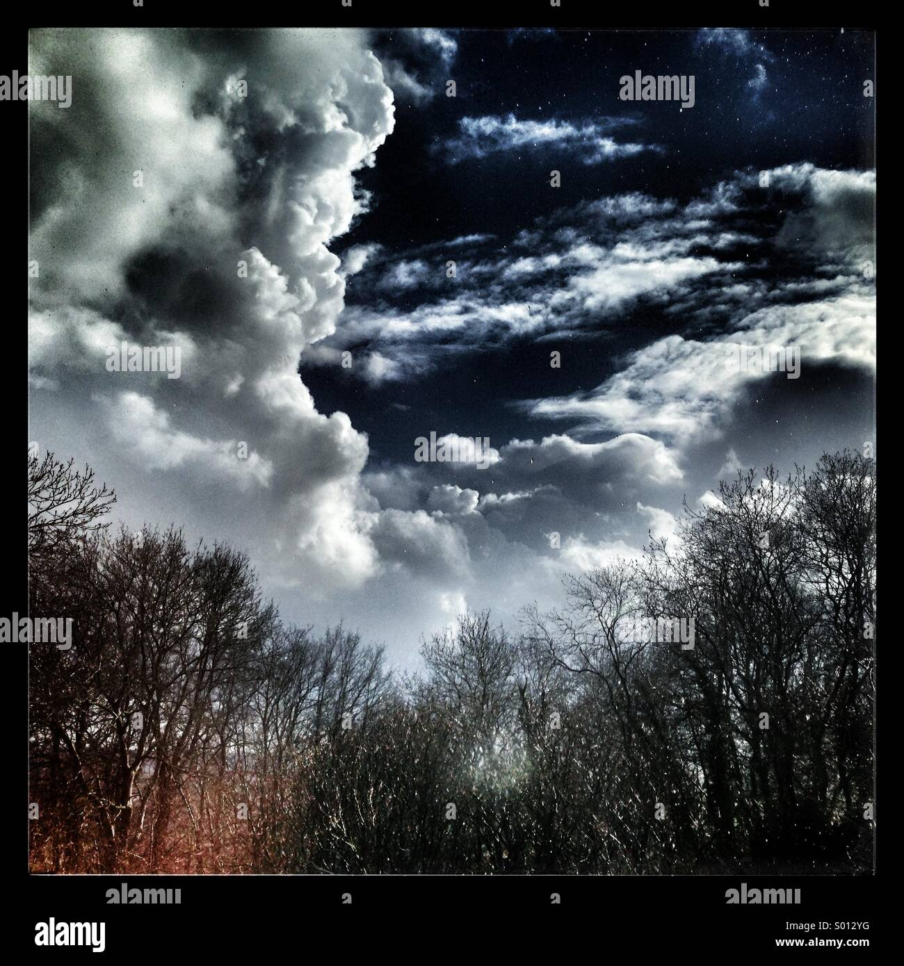 Storm over the woods - Stock Image