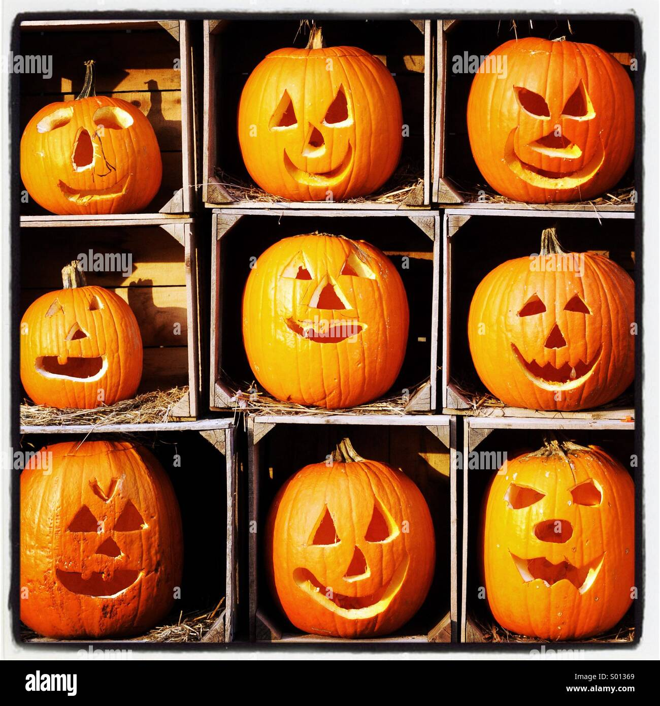9 Pumpkins Carved Into Faces Stock Photo 309811105 Alamy