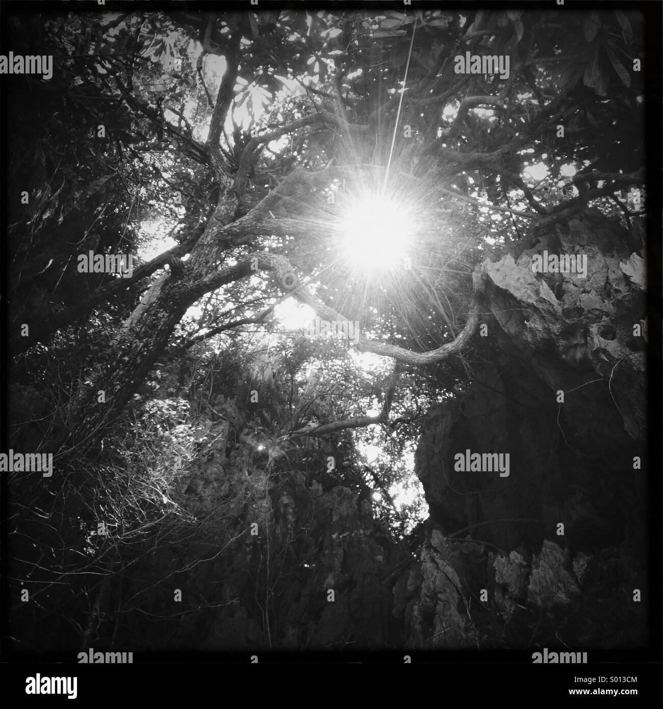 Sun peeking through trees in the jungle in Thailand - Stock Image