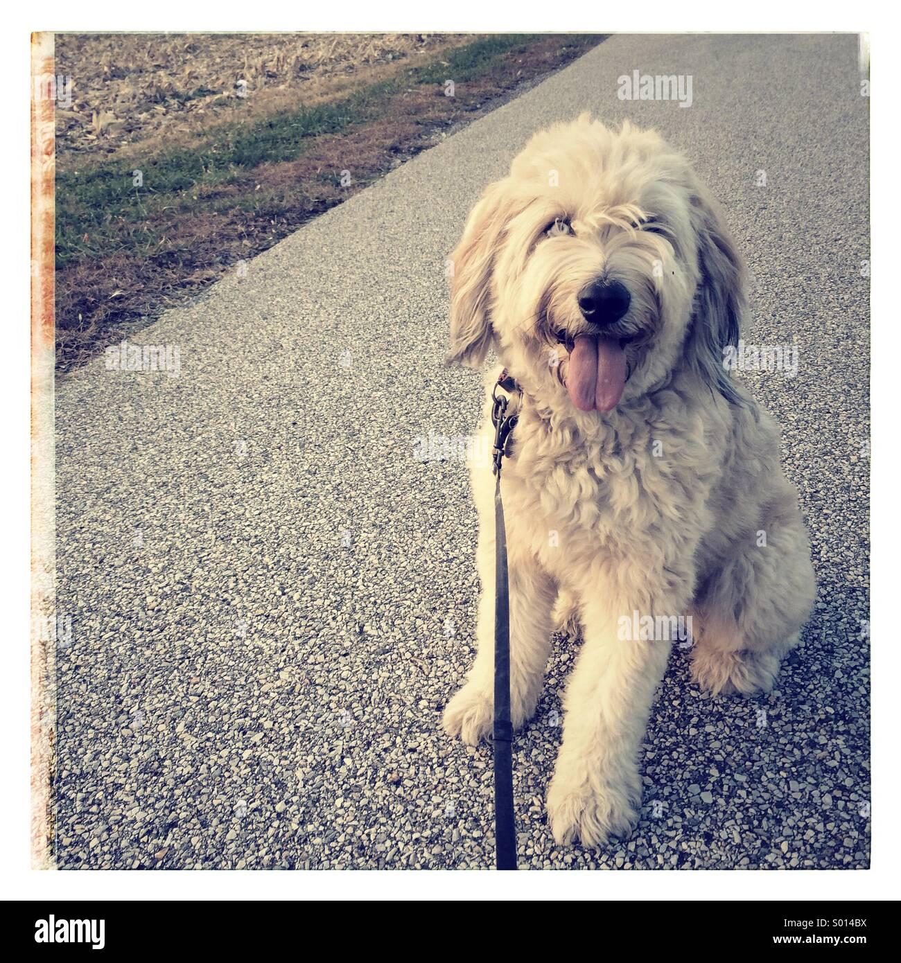 Happy dog walk at the park - Stock Image