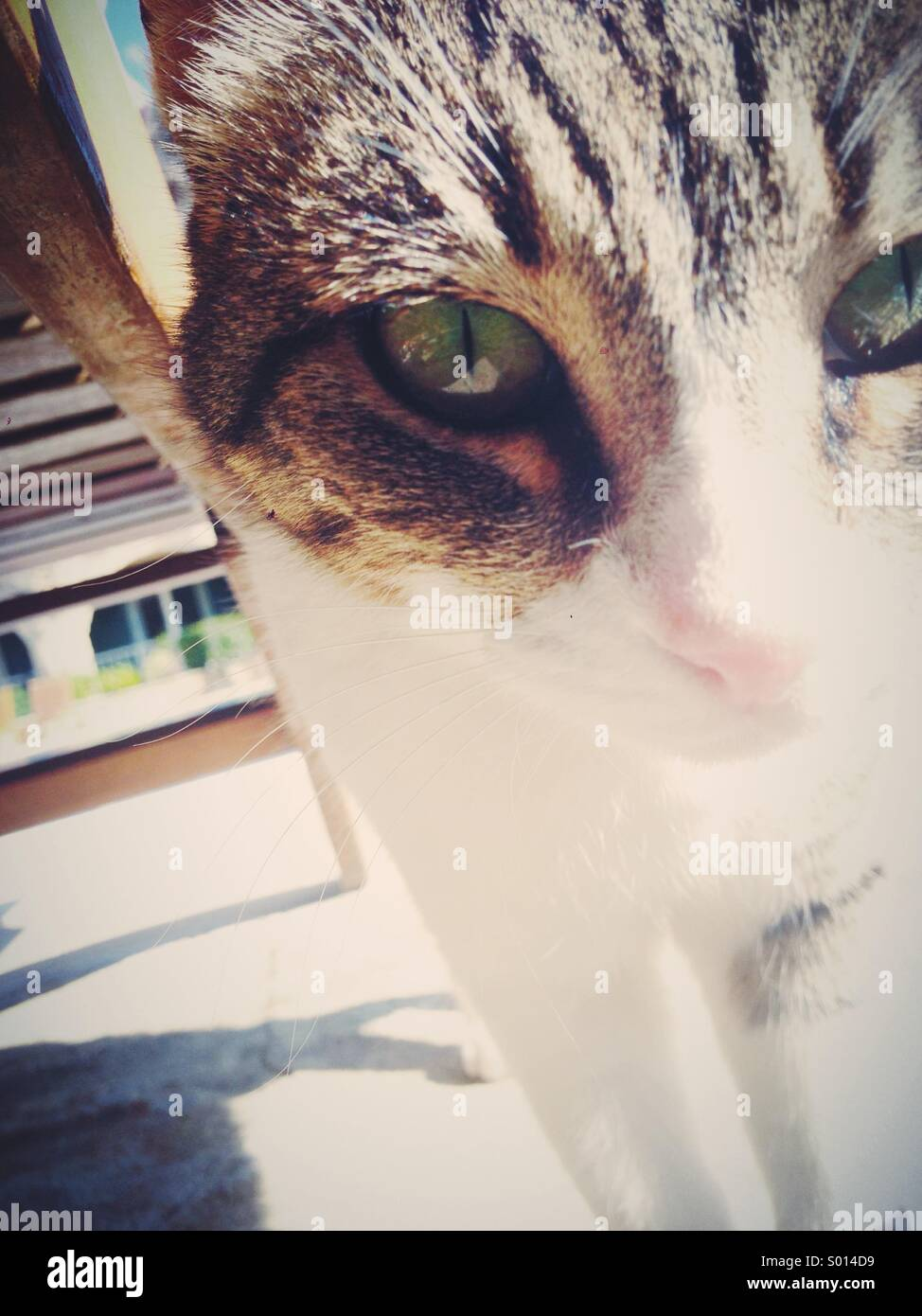 Close up of a cat - Stock Image