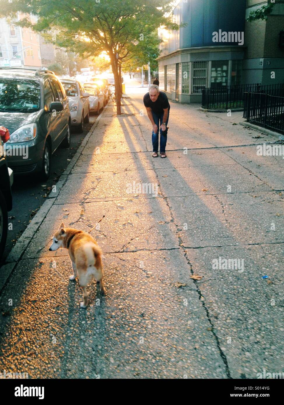 Man cooing pet dog that refuses to walk - Stock Image