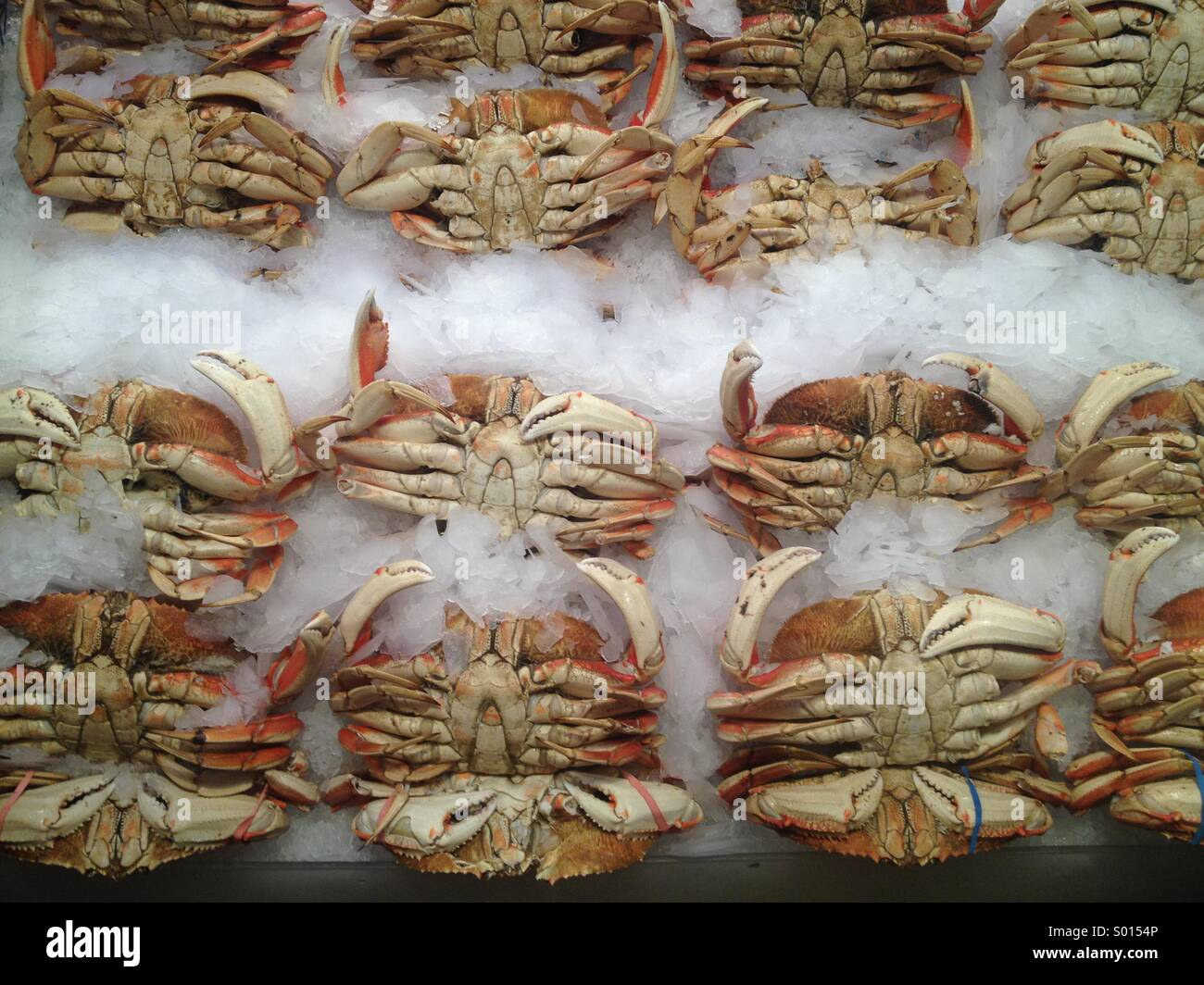 Crab for sale, Pike Place Market, Seattle USA - Stock Image