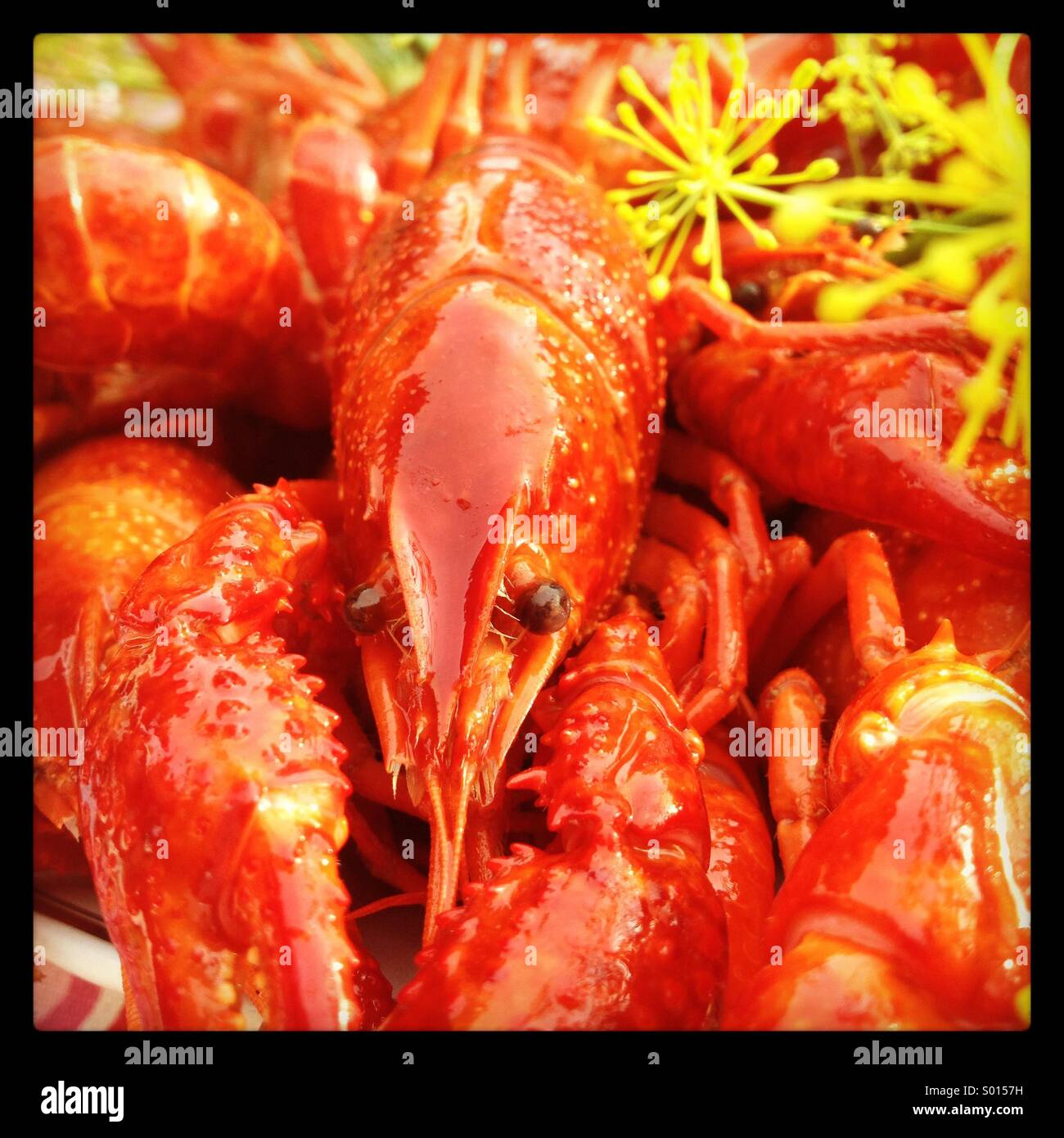A plate of seafood at a Nordic summer crayfish party - Stock Image