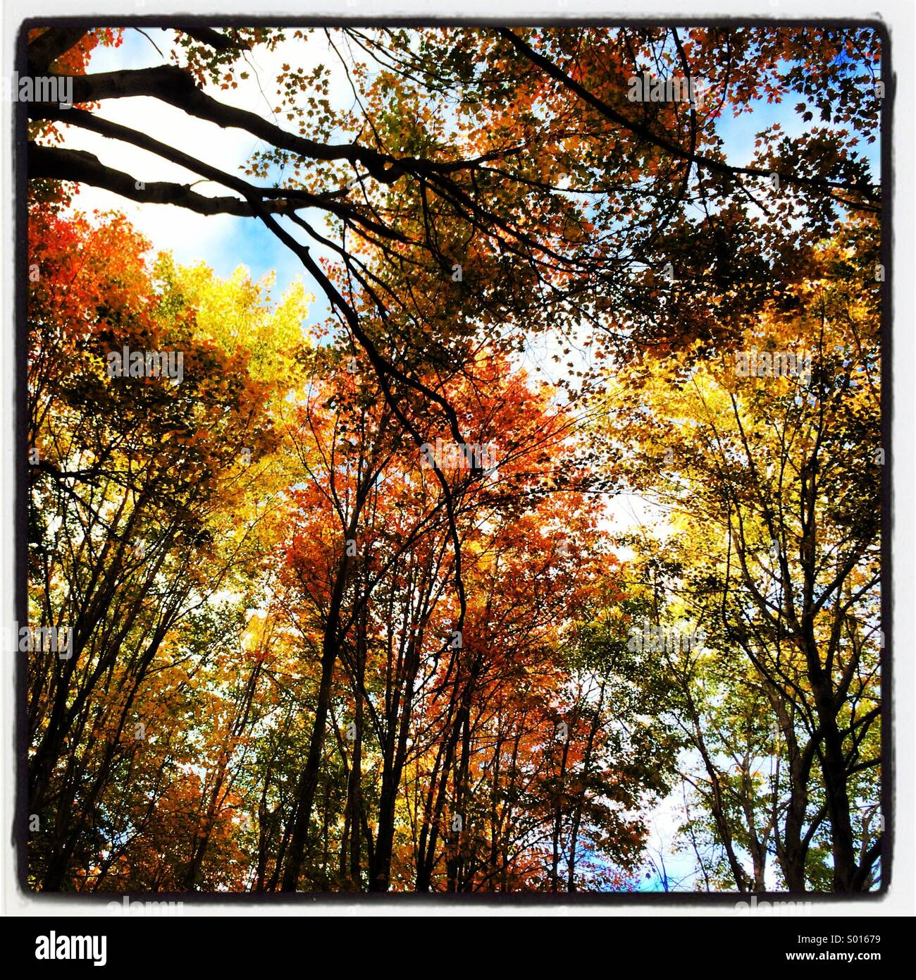 Fall colors in Maine - Stock Image