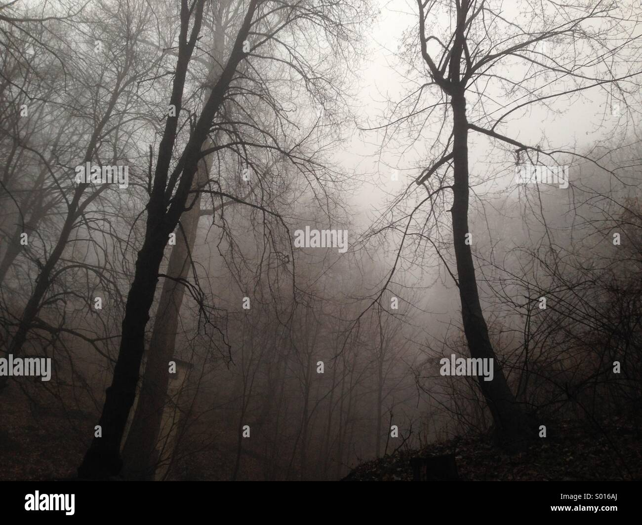forest foggy - Stock Image