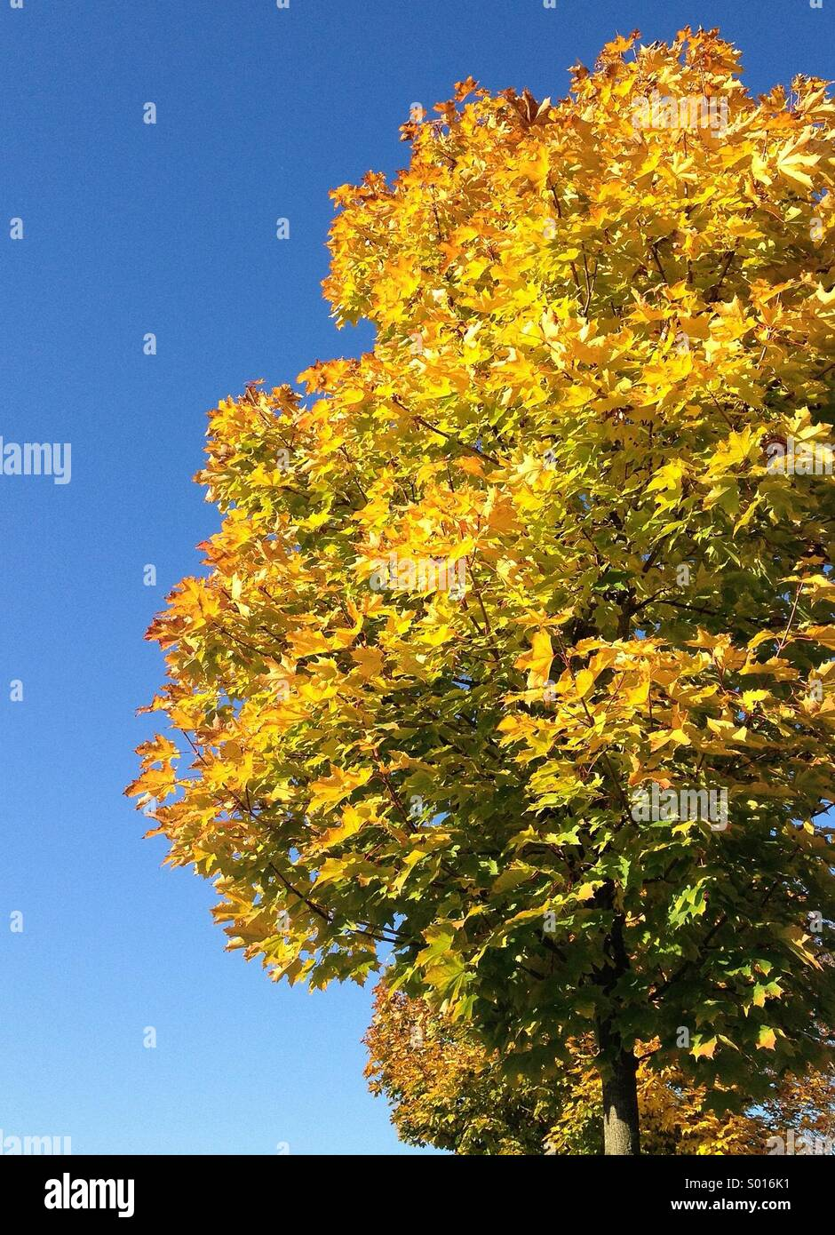 Fall leaves - Stock Image