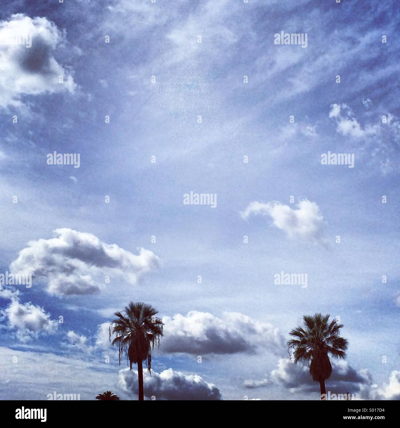 Clouds with two palm trees - Stock Image