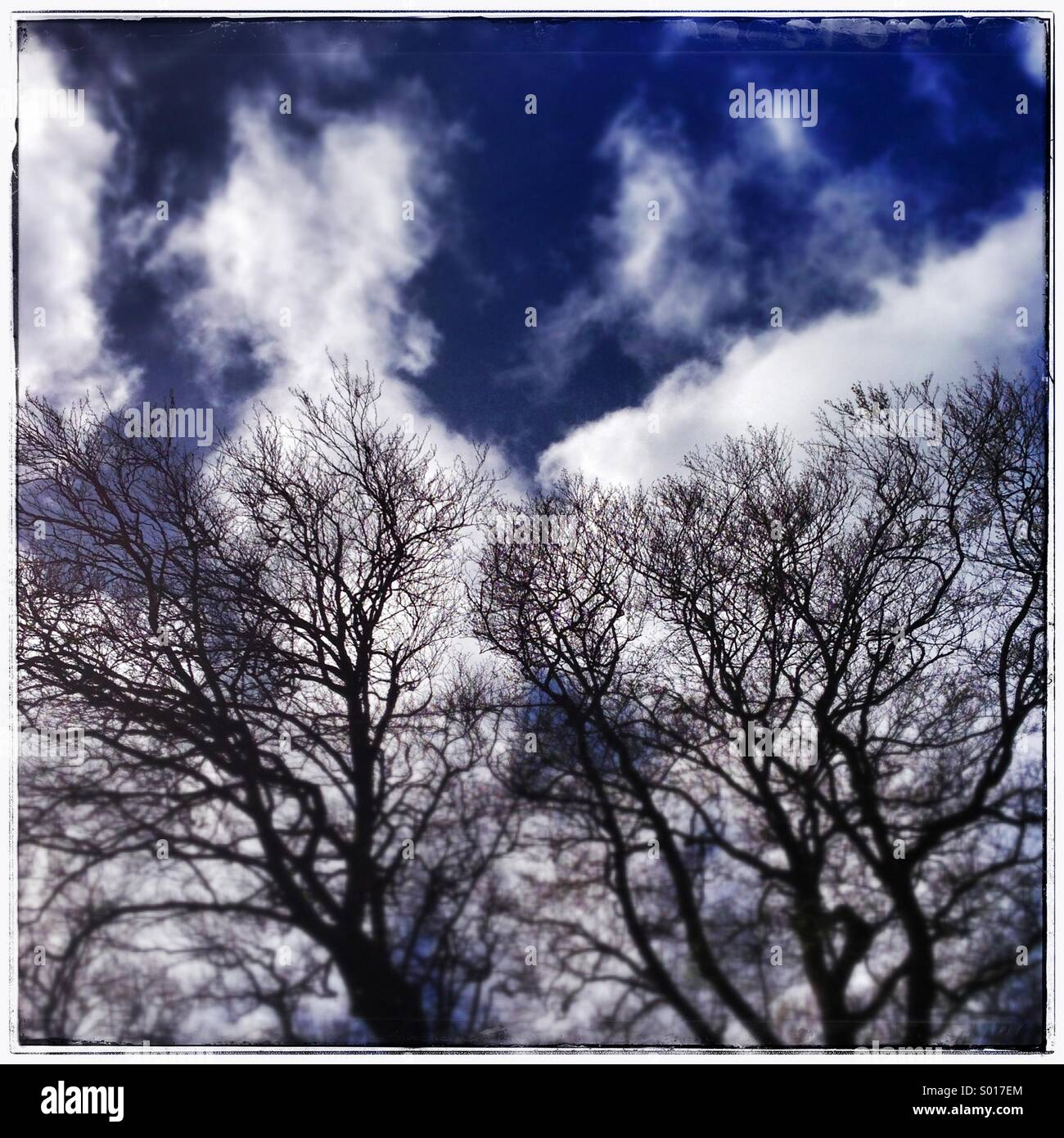 Winter trees with clouds behind - Stock Image