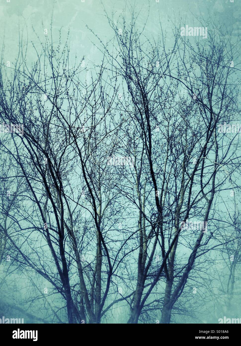Tree branches in winter - Stock Image