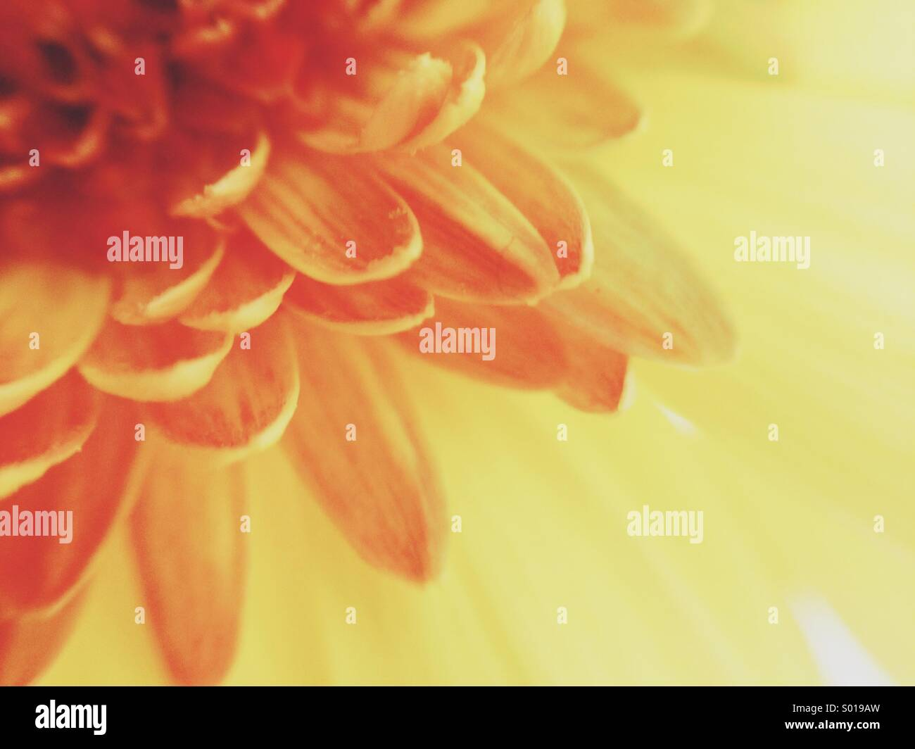 Bring a little sunshine to me - Stock Image