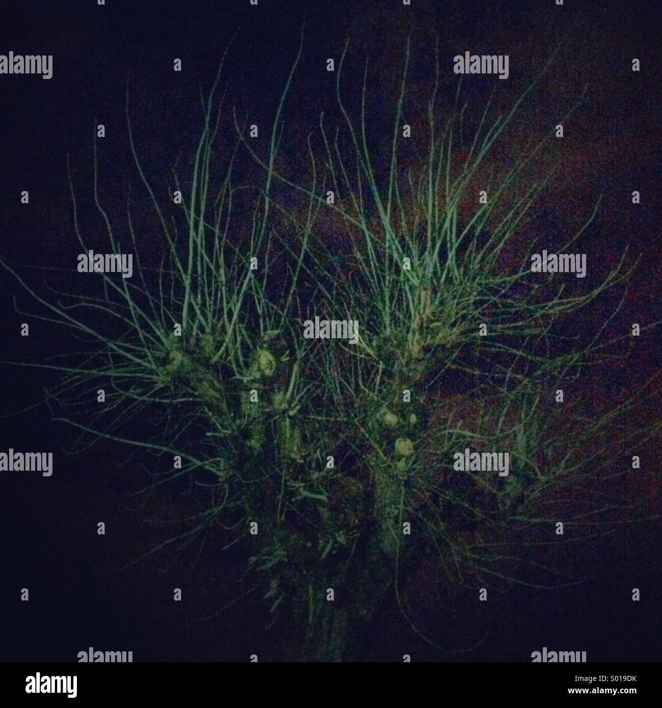 Tree - Stock Image