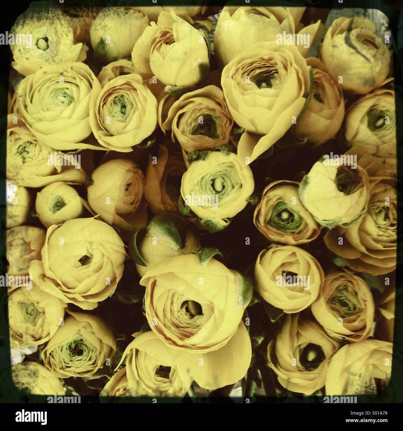 Yellow roses bouquet - Stock Image