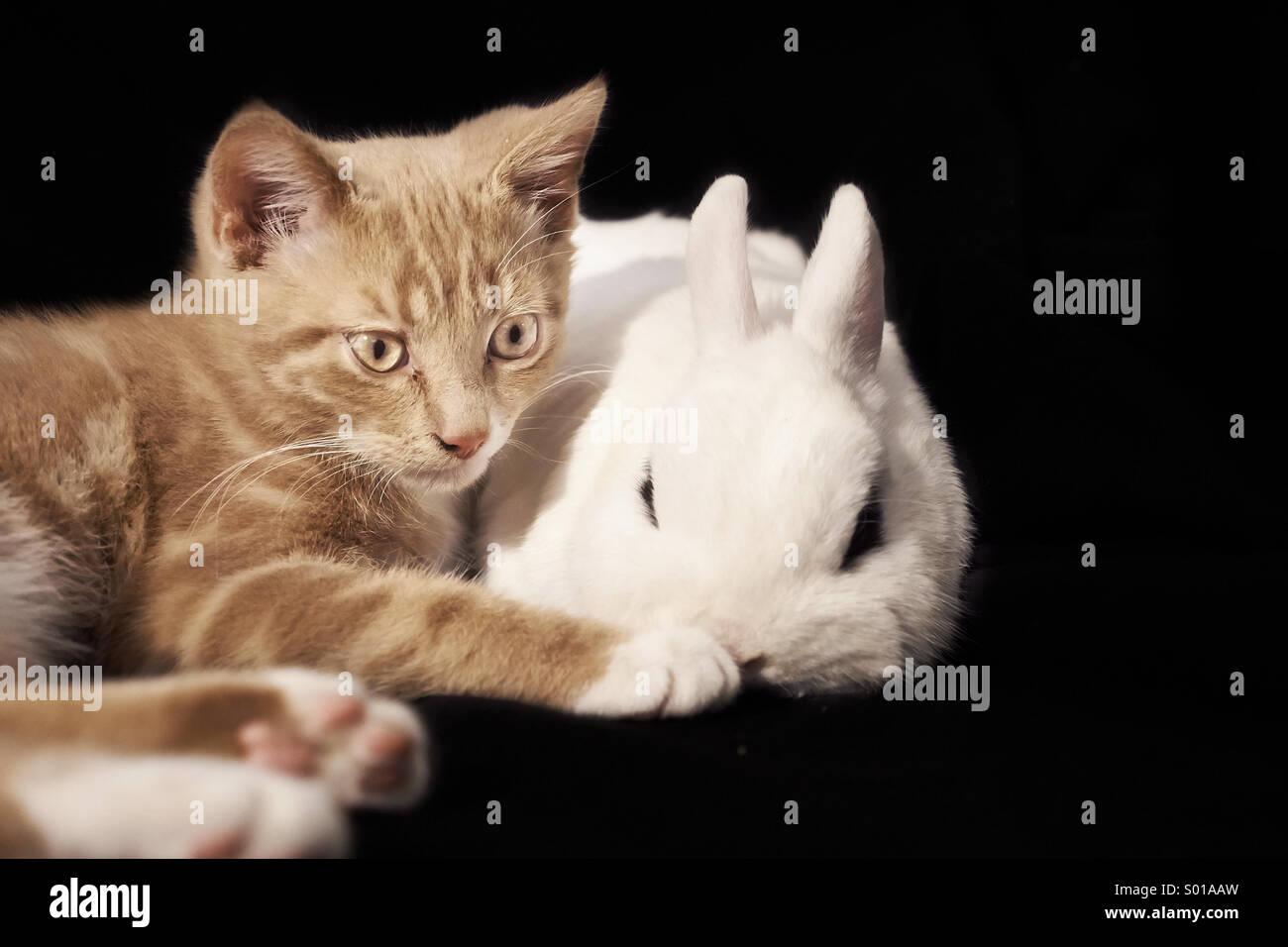 Cat and rabbit cuddle - Stock Image