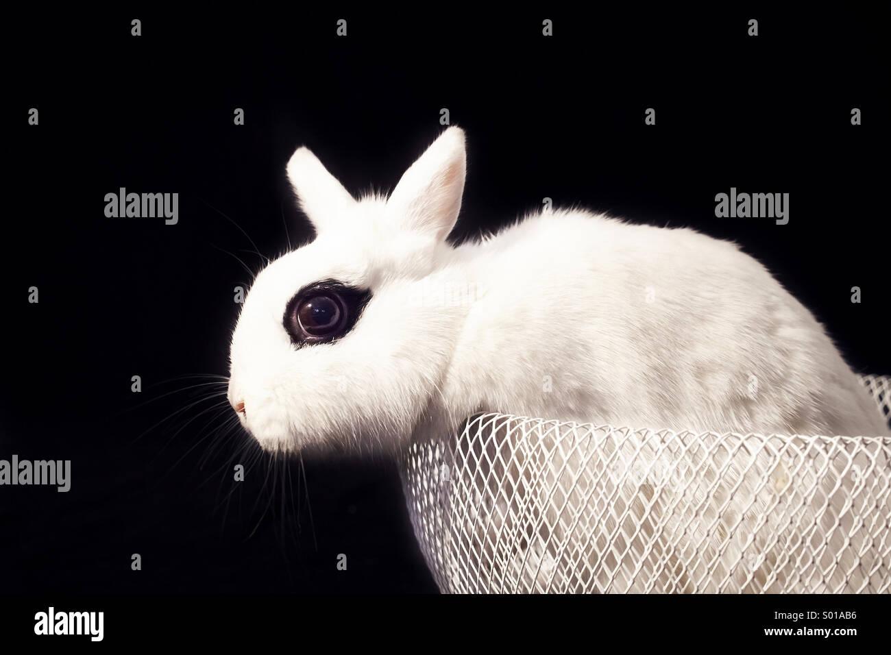 White rabbit in basket - Stock Image