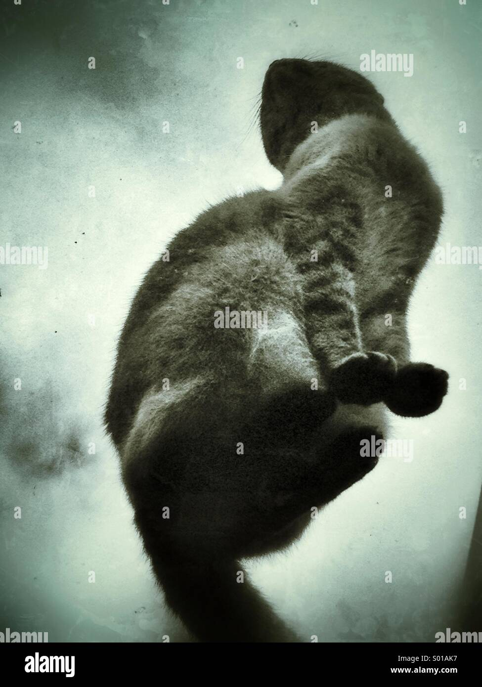 Cat on a hot glass roof - Stock Image